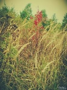 Jesień Zdj moje