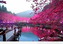 Japonia *-*