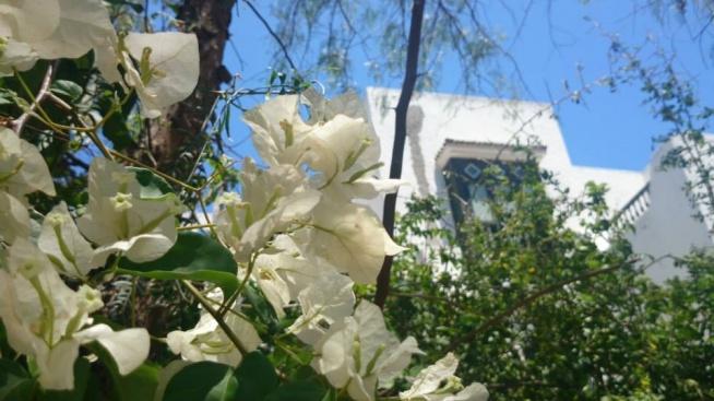 [Obrazek: 8329-tunezja-sousse--ogrody-w-el-kantoui.jpg]