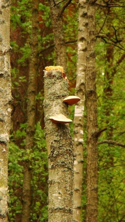 Włodawa 2011 Sobibór. Piękne Włodawskie lasy, polecam! Fotografia z kategorii podróże, miejsca, natura.
