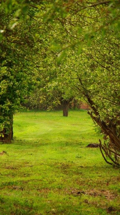 [Obrazek: 3776-wlodawa-2011--ranczo-przepiekna-wlo.jpg]