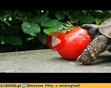 Lubimy pomidora :) Więcej n...
