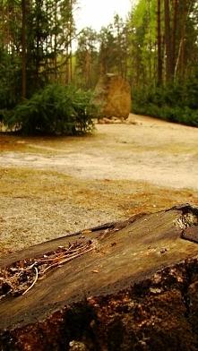 Włodawa 2011 Sobibór, jesiennie. Fotografia z kategorii podróże,miejsca.