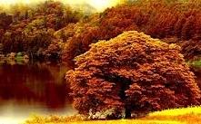 Autumn *.*