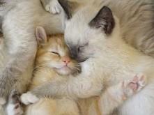 Oto 43 dowody na to, że zwierzęta też lubią się przytulać :) WIĘCEJ PO KLIKNI...