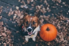 Warto kochać spacery, bez względu na porę roku! Jesienny spacer pomoże Ci podnieść odporność, poprawić kondycję, no i spalić niedzielny obiad ;) Warto!