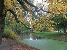 złota jesień park