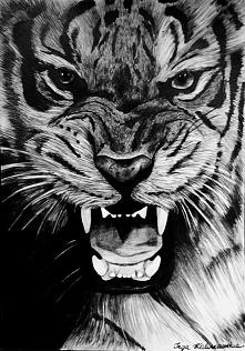tygrys rysunek ołówkiem