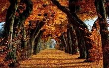 Piękna jesień <3