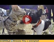 Na wystawie psów kot rządzi...