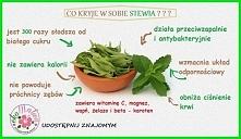 Stewia jest naturalnym i zdrowym zamiennikiem cukru oraz sztucznych słodzików...