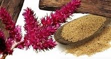 Amarantus jest rośliną ozdobną, lecz posiada wiele właściwości zdrowotnych. B...