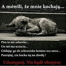 Pamiętajcie psy to nie zaba...