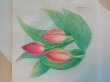 Tulipany. Sama rysowałam. Co o nich sądzicie? :)