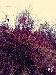 Jesień już od dawna gości w Polsce. A na świecie coraz gorzej,ile jeszcze spokojnych jesieni nam zostanie? #fotografować