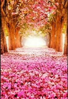 Droga do raju