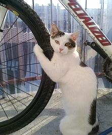 ...to mój rower...