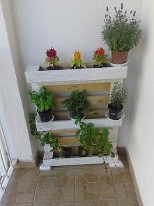 półka z palet na zioła i kwiaty