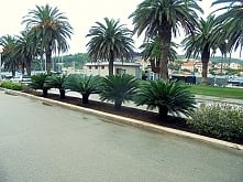 Piękne palmy :)