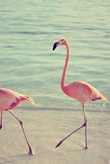 Ładne te flamingi