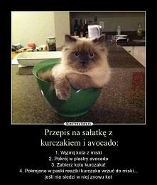 Przepis na sałatkę dla posiadaczy kota ;>