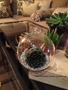 Sukulenty zamknięte w szklanych bańkach! Są przepiękną ozdobą! homemade-stories.blogspot.be