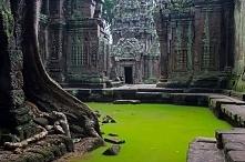 Świątynia Ta prohm. w Kambodży.
