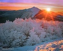 Wschód słońca na Połoninie Wetlińskiej ( fot. fb-Grzechowisko)