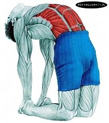 Rozciąganie mięśni brzucha