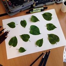 Jeden z tych liści nie jest prawdziwy. Potrafisz wskazać który?
