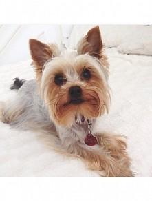 ♥♥ My dog Louis ♥♥