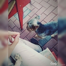 Kocham psy ♥