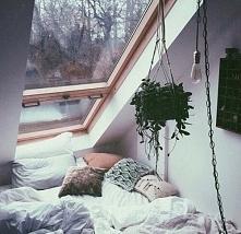 bed & window