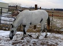 Koń ;)