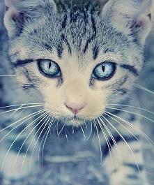 beautiful eyes O.O