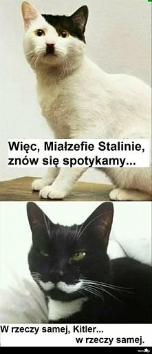 ...kitty ❤❤❤