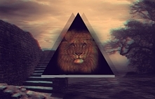 #lion #the #king