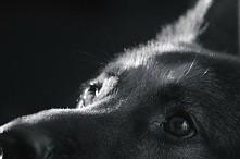 #dog #pets #puppy