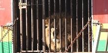 Kochani znów potrzebuję Waszej mobilizacji - NIE dla zwierząt w cyrkach. W im...