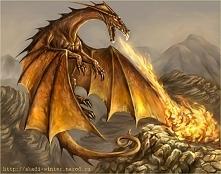 Złote smoki - uznawane są za legendarne, na całym świecie żyje zaledwie kilku...