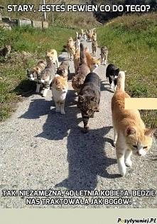 Koty i ich świat