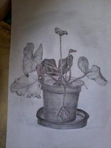 Kwiat w doniczce ;)
