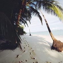 wyspa... palmy.. cudownie ^^