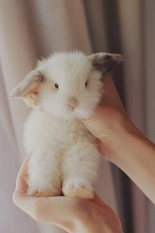 Fluffy ;>