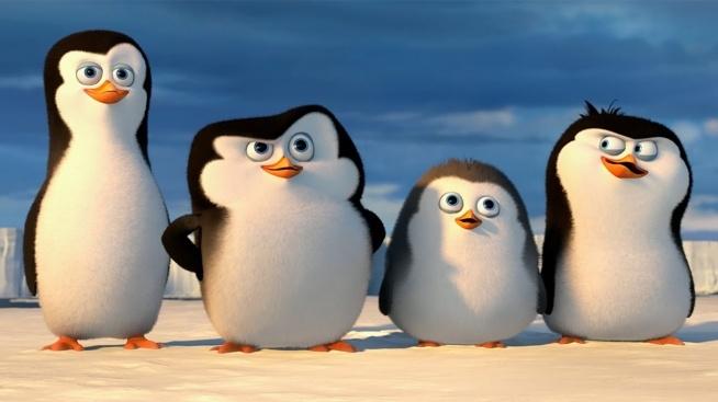 ooo pingwiny