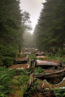 korek w środku lasu