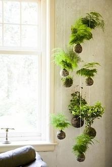 Zieleń we wnętrzu - zobacz jak ją zaaranżować, jak urządzić zieleń we wnętrzu - zainspiruj się! Zielone wiszące doniczki, niewielka zieleń wisząca u sufitu - to jest to! Każda z...