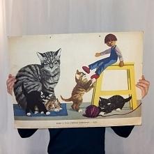 Sceny z życia zwierząt - koty
