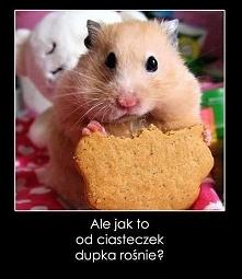 Ciasteczko?