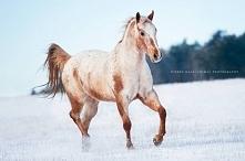 Koń :)